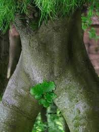 Insolite....la nature !