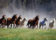 Ce qui fait un bon cheval , c'est un bon cavalier ♥