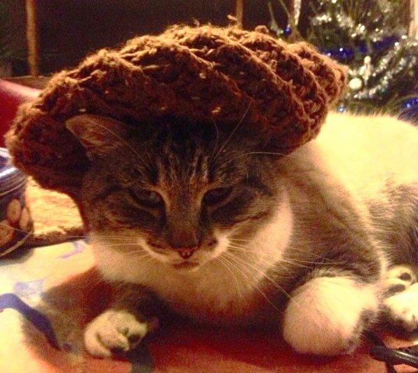 *mon 2 eme chat ;P