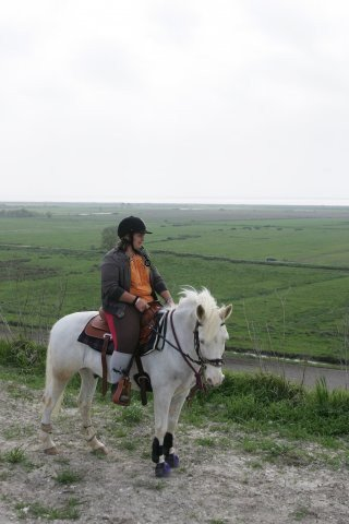 . ♥ Pingoui: Mon deuxième cheval ♥ .