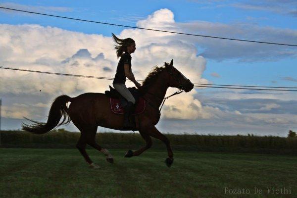 Pozato , cheval au grand coeur ..