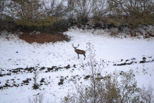 Rien de plus beau que de voir un cerf dans un champ sous la neige