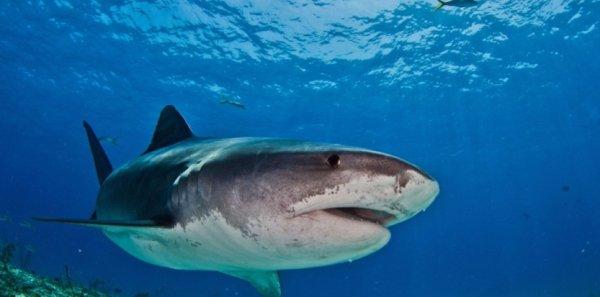 Actu du 18/07/2013 : la Réunion  les attaques de requin, un danger pour le tourisme