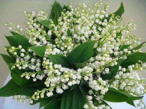 Que ce bouquet vous apporte plein de bonheur pour toute l'année !