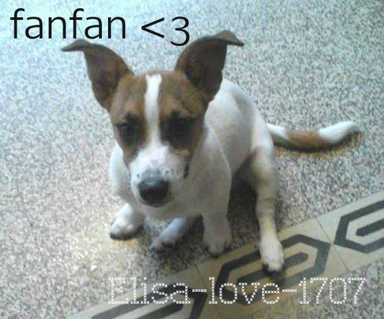 Fanfan (l)