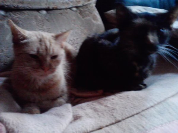 Ma grenadine qui est parti hier au paradis des chats et sa soeur n arrete pas de pleure :'( :'( :'(