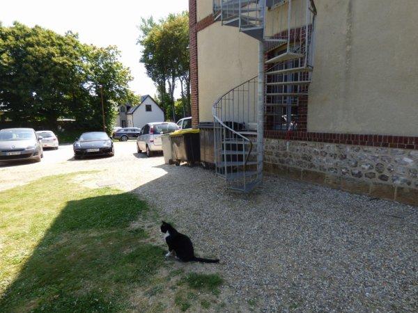 Le chat qui vient à la gare des Loges