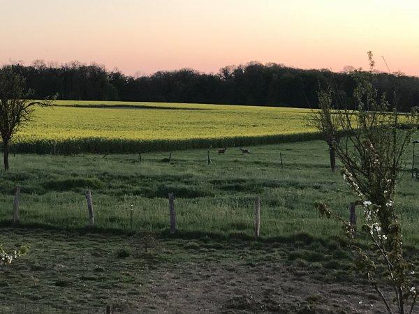 Pâques au pays des cigognes