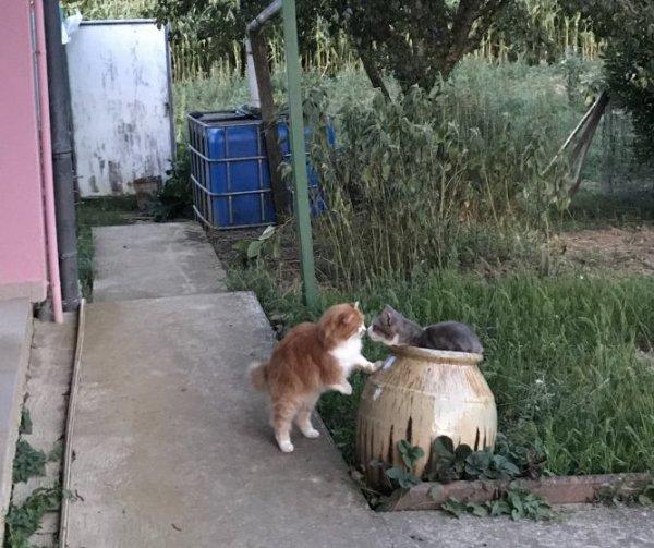Sur le plateau de Gergovie - client croquettes pour chat