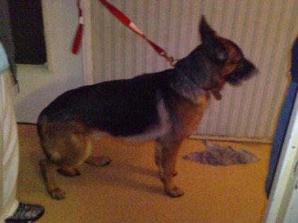 le nouveau chien a mon pere son nom c est eros