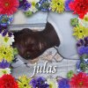 julesseck