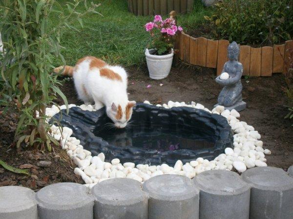 chatmour nous pr pare un petit plan d 39 eau pour nous rafraichir dans le jardin ma passion. Black Bedroom Furniture Sets. Home Design Ideas