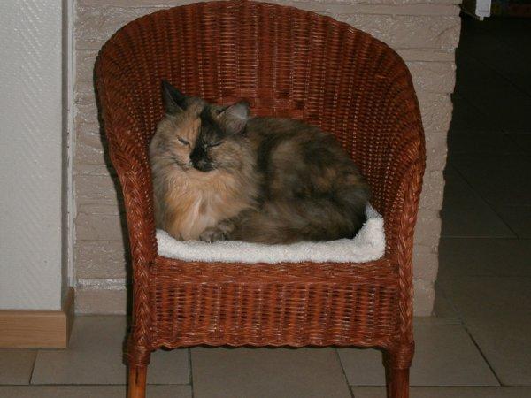 nouvelle chaise pour les chats...