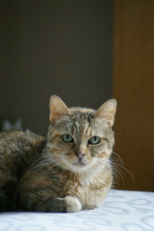 Mamy Lily se débrouille très bien sur ses 3 pattes... un amour de chat...