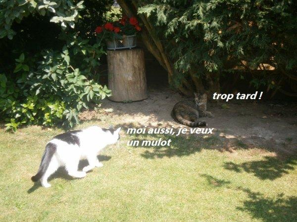 Yoko l'intrépide et Kenzo qui essaye de la suivre...
