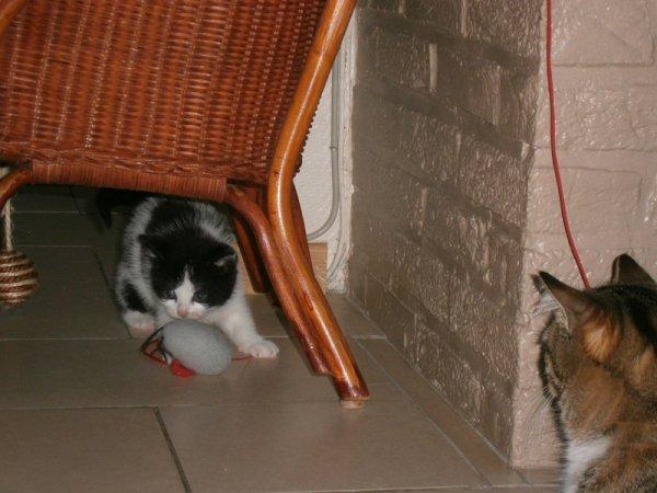demain l'adoptante de Domino vient lui rendre visite
