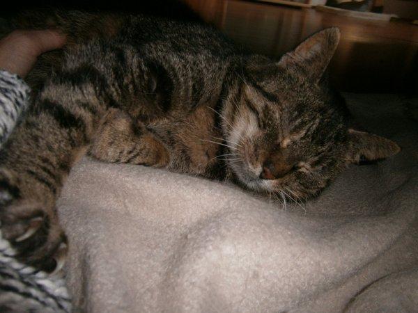 Lilou +/- 15 ans est une des deux chattes que nous nourrissons depuis plus de 10 ans dans un zoning à Bruxelles, nous n'avons plus de nouvelle de la plus jeune Lily, après 15 jours d'attente nous avons pris la décision de la prendre chez nous, elle n'avait plus la force d'affronter l'hiver, se laissait aller d'avoir perdu sa copine et ne mangeait plus..