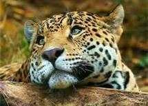 animaux <3 ^^