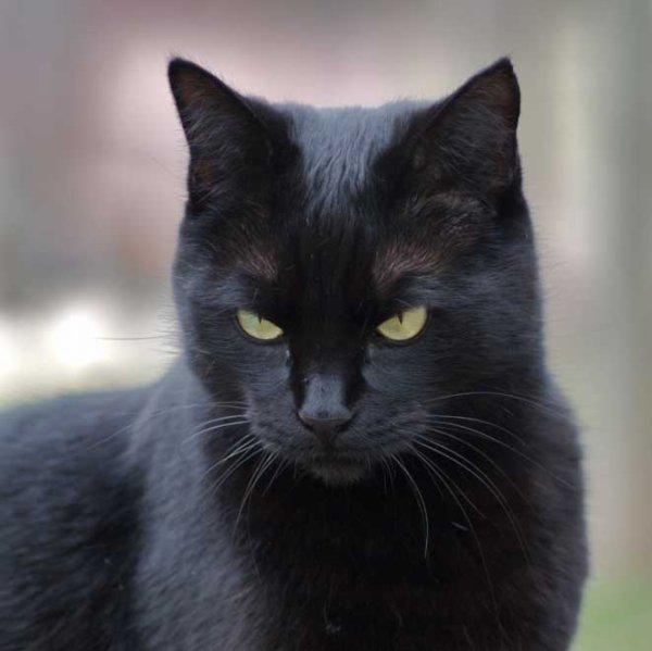 Mon animal préférer : le chat ^^ <3