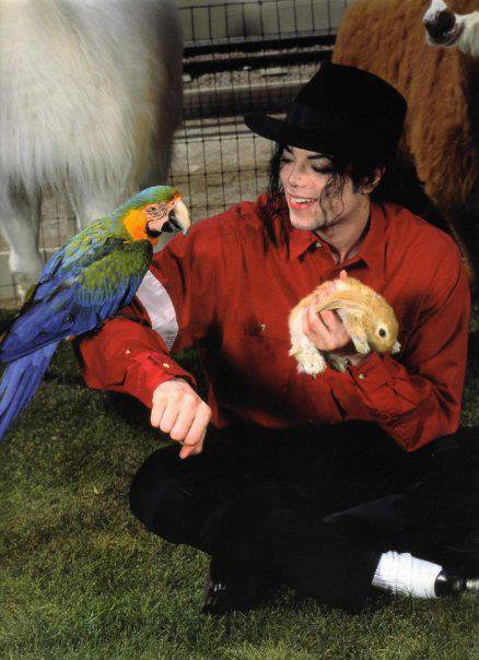 animaux , Michael