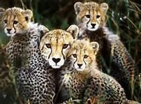 animaux TROP BEAUX