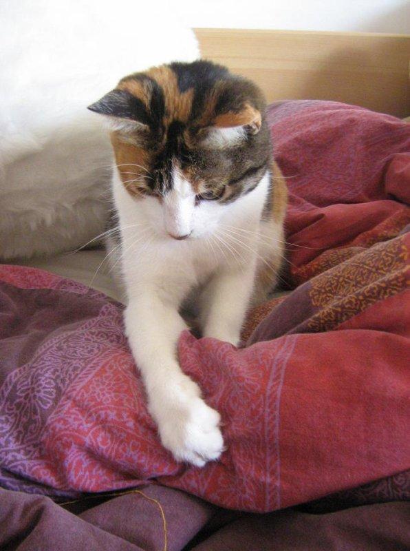 Mon chat Bianca (MiniM-J-2)