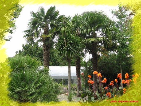 Les vacances 2011. Le jardin