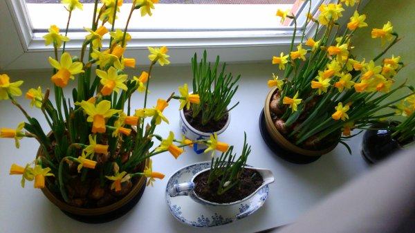 en attendant le printemps