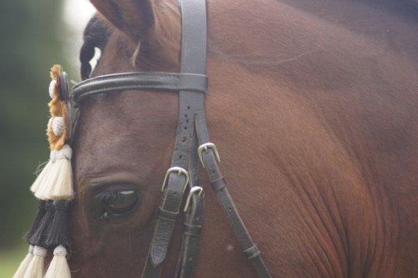 L'amour du cheval.
