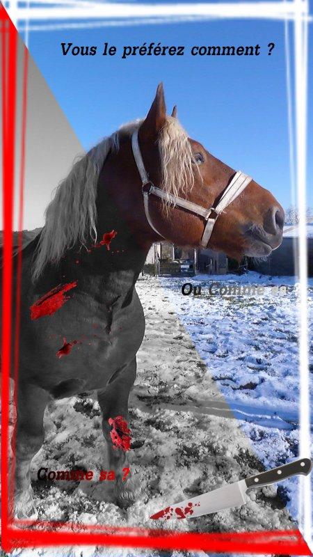 ♦ article deux | par-ce qu'on doit se battre ensemble contre l'hippophagie. Défendons nos amis les chevaux! Arrêtons ensemble le massacre.