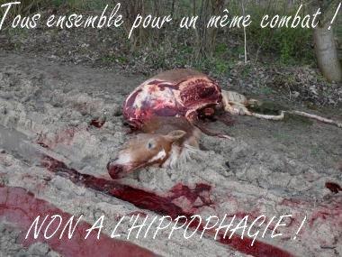 ♦ article quatre | ne les laissez pas mourir dans l'horreur et la souffrance..., aidez nous à arrêter ces horribles massacres!