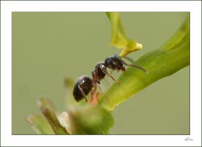 en t as tu d j observ les fourmis ce sont des insectes toujours occup s qui travaillent. Black Bedroom Furniture Sets. Home Design Ideas