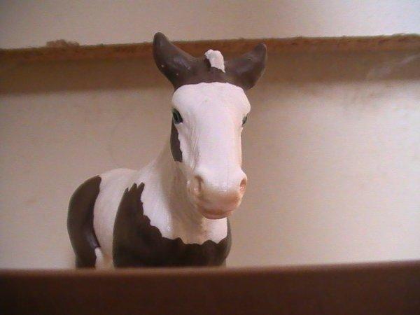 Nouveaux chevaux