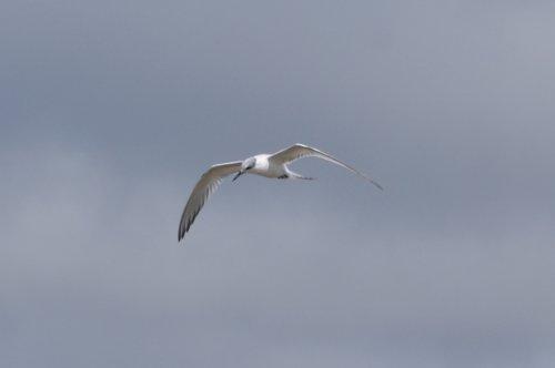 Aout 2011 - Des oiseaux