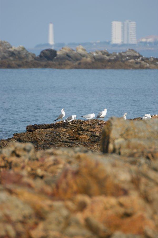 Septembre 2012 - Goelands et Sables d'Olonne vu de la Baie de Cayola