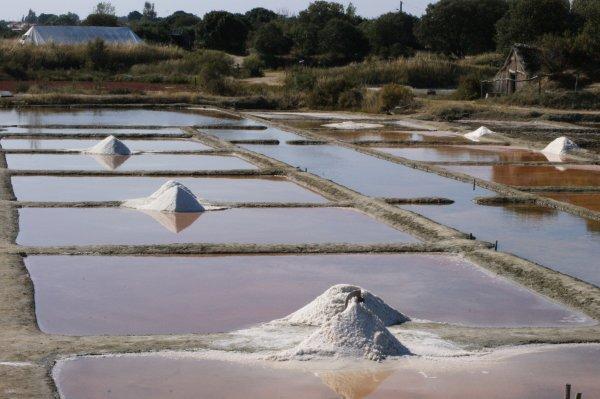 Septembre 2012 - Marais Salant