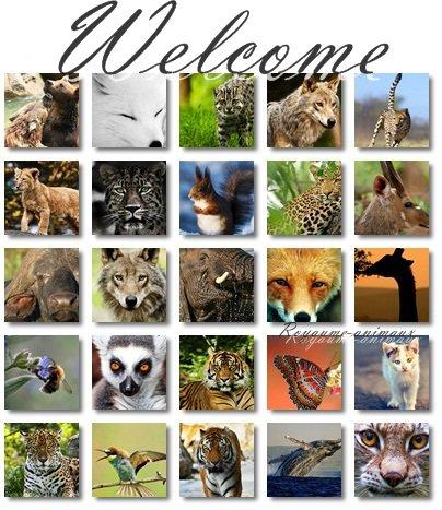 Royaume-animaux #