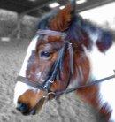 Photo de I-love-you-horse59141