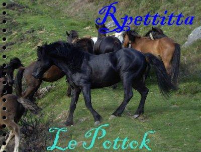 → Le Pottok