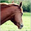 Être heureux à cheval, C'est être entre ciel et terre, A une hauteur qui n'existe pas . ♥