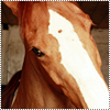Je vois parfois dans le regard d'un cheval, la beauté inhumaine d'un monde d'avant le passage des hommes . ♥