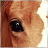 Un cheval ne se regarde pas avec les yeux mais avec le coeur . ♥