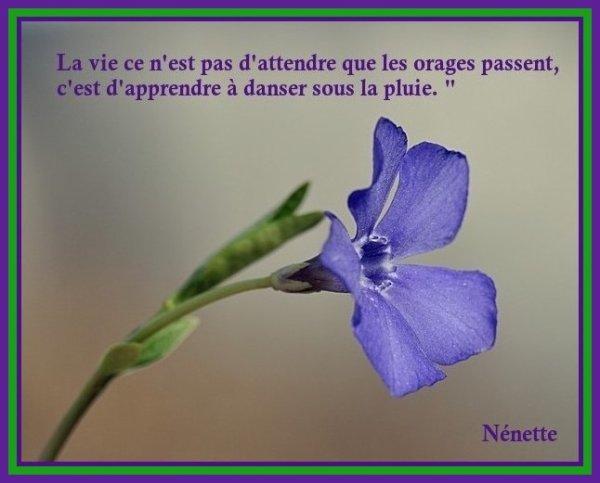 La Vie.........
