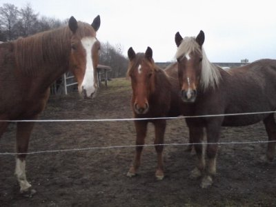 les chevaux d emeline