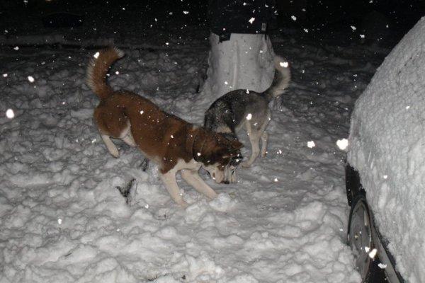 28 novembre sous la neige