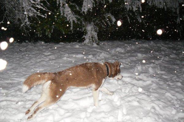 Toujours le 28 novembre sous la neige