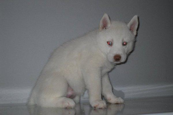 Femelle blanche à 5 semaines !!!