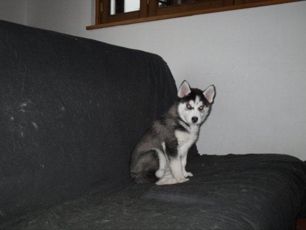 Eva à 8 semaines