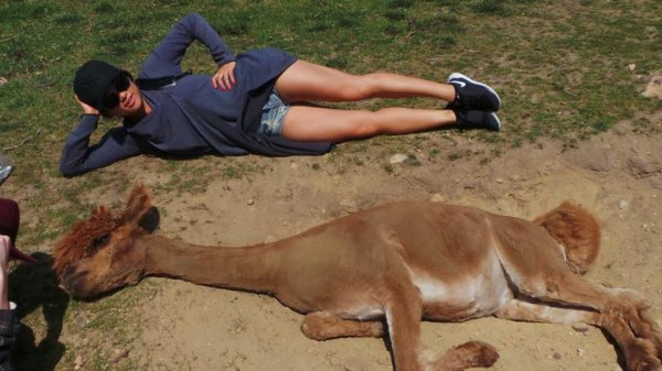 Jenna et les lamas :)