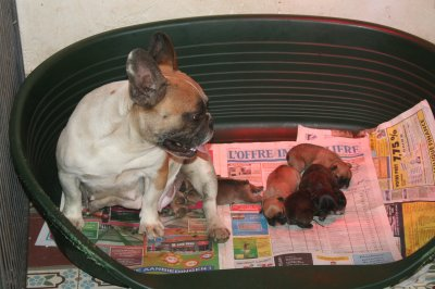 Les bébés de Ulla et polo née le 11/7/2011